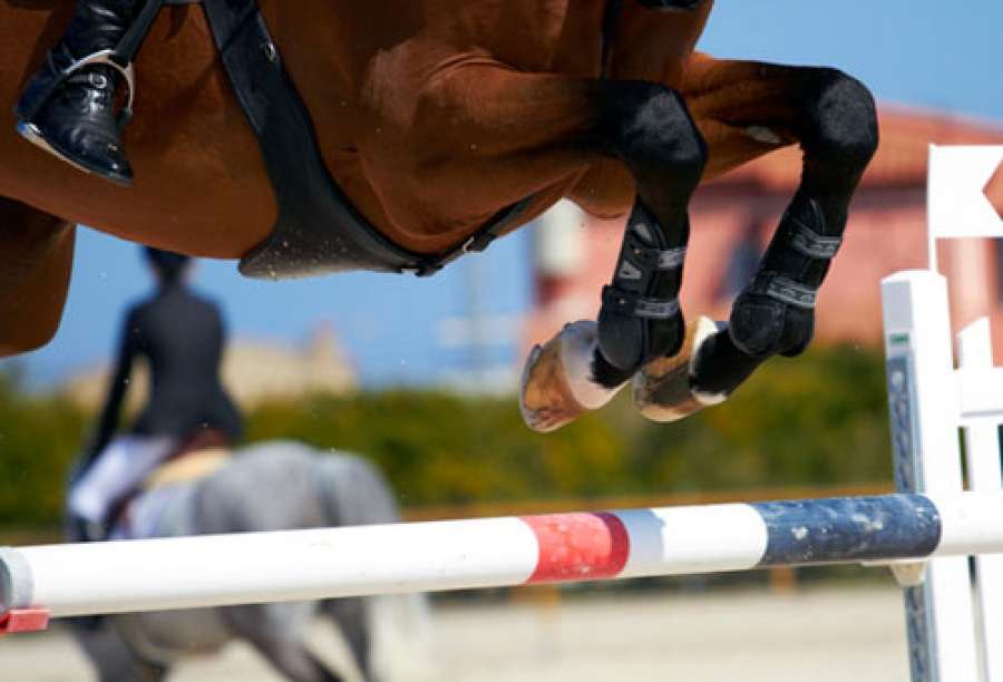 Equestrian Sports Insight: From the Farm to the Olympics (Video)